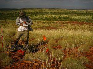 Coral haciendo registro con grupo Aborigen en la región de Pilbara, Western Australia.